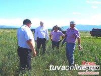 Тандинский кожуун Тувы нацелен на серьезный прорыв в сельхозпроизводстве
