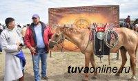 Первое место в конкурсе на лучшее конское снаряжение - у Айбеса Олчея (Тува)