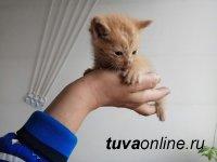 Кызыл: Выставка собак и кошек с передержек — «В ДОБРЫЕ РУКИ»!