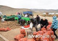 Зачем нужна кооперация овощеводов Тувы?