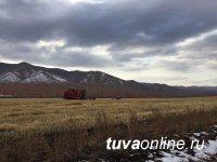 В Туве заготовлено на 40% больше кормов, чем в прошлом году