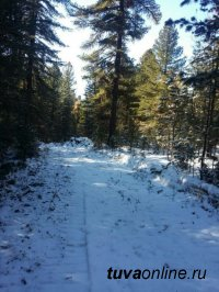 """Завершена работа по прокладке новой 5-км лыжной трассы на станции """"Тайга"""""""