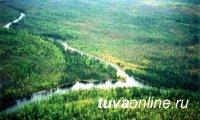В 2018 году лесные субвенции Туве планируется увеличить на 62%