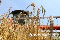 Общий намолот зерновых в Туве на 1 ноября 2017 года на 39% превышает объемы прошлого года