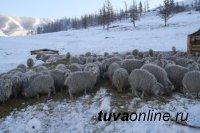 Глава Тувы поставил задачу тщательно контролировать ход зимовки скота