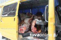 Сотрудниками полиции по «горячим следам» раскрыта кража 5 лошадей, совершенная в Тандинском районе