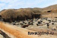"""105 новых """"кыштаговцев"""" готовятся получить по 200 овцематок от первых участников проекта """"Кыштаг для молодой семьи"""" (Зимник)"""