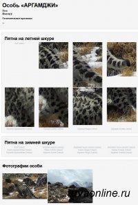 Более 60 снежных барсов России получили «электронные паспорта»