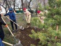 В Кызыле в праздничные дни вовсю ведутся посадки деревьев