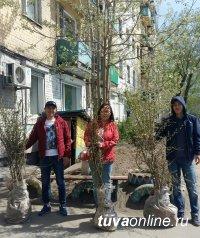 Зимостойкие яблони, груши, туя, рябина, сирень, ясень, миндаль, айва японская, березы, сосны – посажены в эти дни на улицах, скверах, во дворах Кызыла