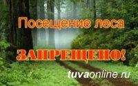 В Туве до 6 июня в целях противопожарной безопасности  введен запрет на посещение лесов