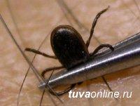 Тува: Роспотребнадзор призывает воздержаться от посещения лесных и таежных массивов в сезон максимальной активности клещей