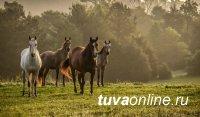Спустя 3 года угнавший из Монголии табун лошадей скотокрад предстал перед судом