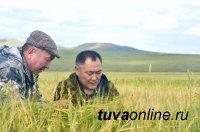В Туве возрождают главную зерновую житницу республики