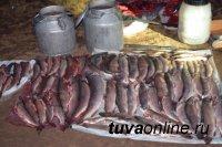 Жители Хакасии задержаны в тувинском заказнике с незаконной добычей