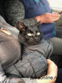 Кота, три дня просидевшего на электроопоре в Сукпаке, спасали всем миром
