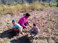 В Туве огородничеством охвачено 72% всех домохозяйств республики