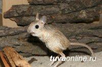 В Национальном музее Тувы 26 октября пройдет конкурс знатоков тувинских названий животных, растений, традиционных предметов