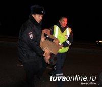 За сутки в Туве полицейские задержали пять нетрезвых водителей!