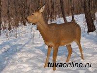 В Туве охотник случайно застрелил друга, приняв за косулю
