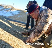 Росстат: в Туве в 2018 году вырастили в 2,2 раза больше зерновых и зернобобовых, чем в 2017 году