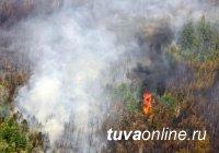 В 2018 году в Туве было зарегистрировано 99 лесных пожаров