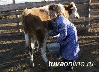 Красноярскстат: В Туве средние надои молока с одной коровы выросли на 161 литр