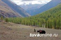 Прогноз состояния лесов Тувы в первом полугодии 2019 года