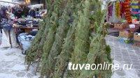 Вывоз из карантинных фитосанитарных зон новогодних елок возможен только с карантинным сертификатом