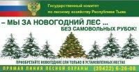 Незаконная рубка елок наказывается административными штрафами