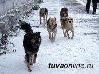 В Кызыле планируют построить питомник для безнадзорных животных