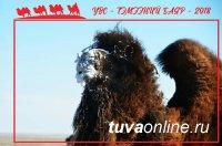 В Увс аймаке Монголии 9 марта пройдет Фестиваль верблюдов