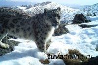 Еще одна область обитания ирбиса признана заповедной в Туве