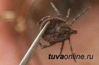 В Туве уже есть первые пострадавшие от клещей