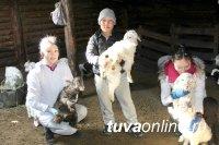 Окот без потерь. Студенты сельскохозяйственного факультета ТувГУ окажут помощь чабанам республики