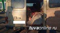В Пий-Хемском районе инспекторы ДПС задержали подозреваемых в хищении пяти голов крупного рогатого скота