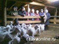 Молодых животноводов в Туве учат предпринимательству