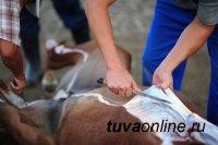 В Туве задержаны скотокрады и сбытчица мяса похищенных животных