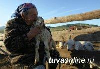 Окотная компания в Туве проходит в штатном режиме