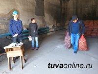 В Кызыле началась выдача семенного картофеля 563 социально-незащищенным семьям