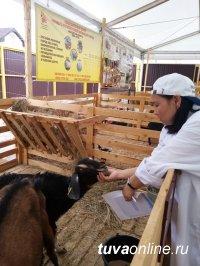 Преподаватель ТувГУ в качестве эксперта на 20-й Российской выставке племенных овец и коз