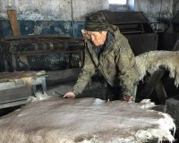 В кожуунах Тувы создаются опорные хозяйства по выделке шкур, создается сеть по приемке шкур на выделку