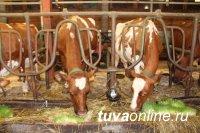 В Туве с рабочим визитом побывали специалисты центра воспроизводства сельхозживотных