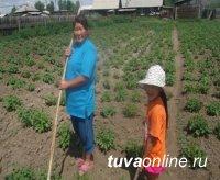 В сёлах и деревнях Тувы появились первые всходы «Социального картофеля»