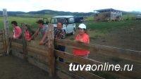 Тува: В селе Арыскан идёт передача двухсот овец следующим участникам губернаторского проекта «Кыштаг для молодой семьи»