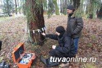 В августе стартует реализация социального проекта «Общественный лесопатолог Чеди-Холя»