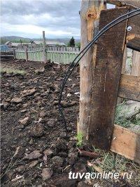 В Туве энерговоры убили двух коров
