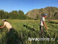 В Туве появилась возможность провести сенокос во второй раз