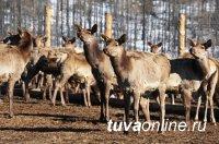 Мараловодческое хозяйство «Туран» с начала года посетили 3077 туристов