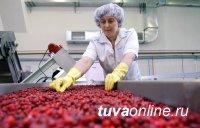 В Туве сельскохозяйственные кооперативы поддержат грантами